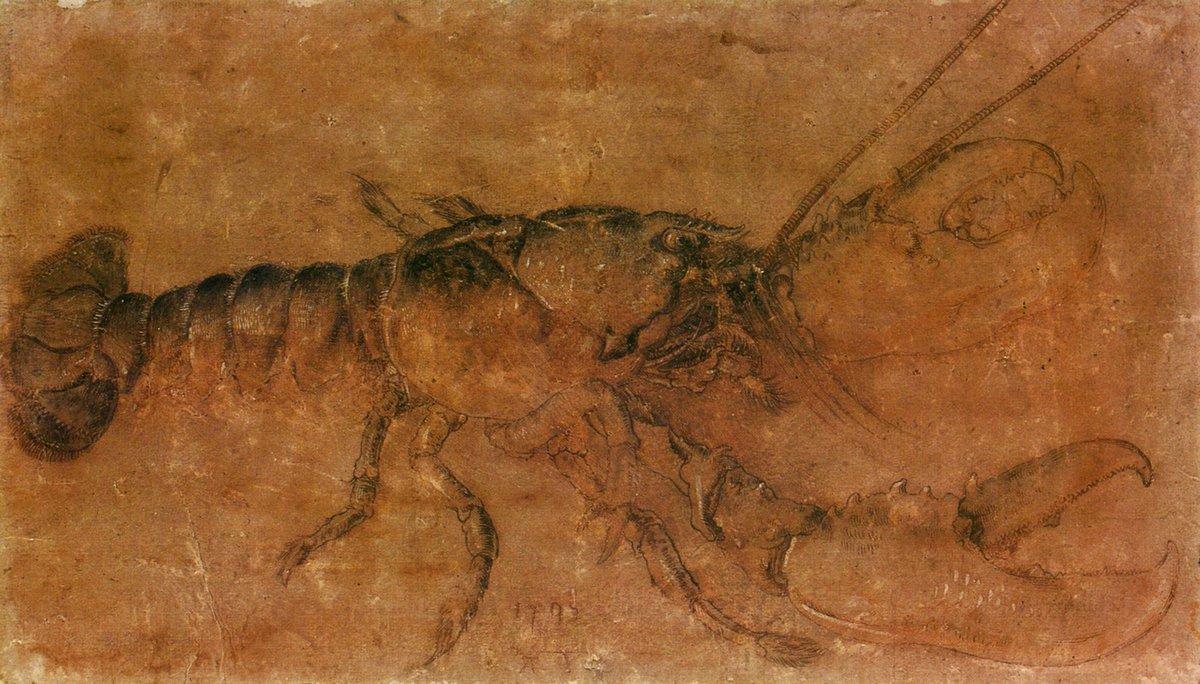 A lobster - Albrecht Durer