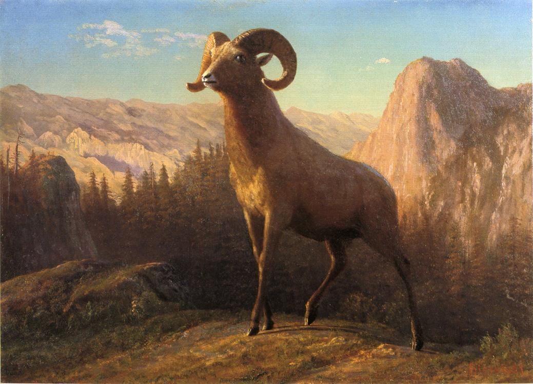 A Rocky Mountain Sheep, Ovis, Montana - Albert Bierstadt