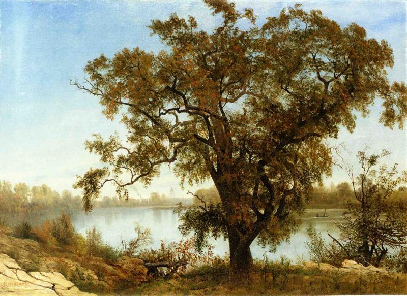 A View from Sacramento - Albert Bierstadt