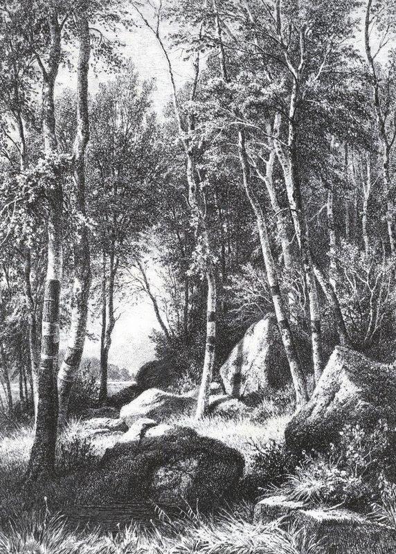 At the edge of a birch grove. Valaam - Ivan Shishkin