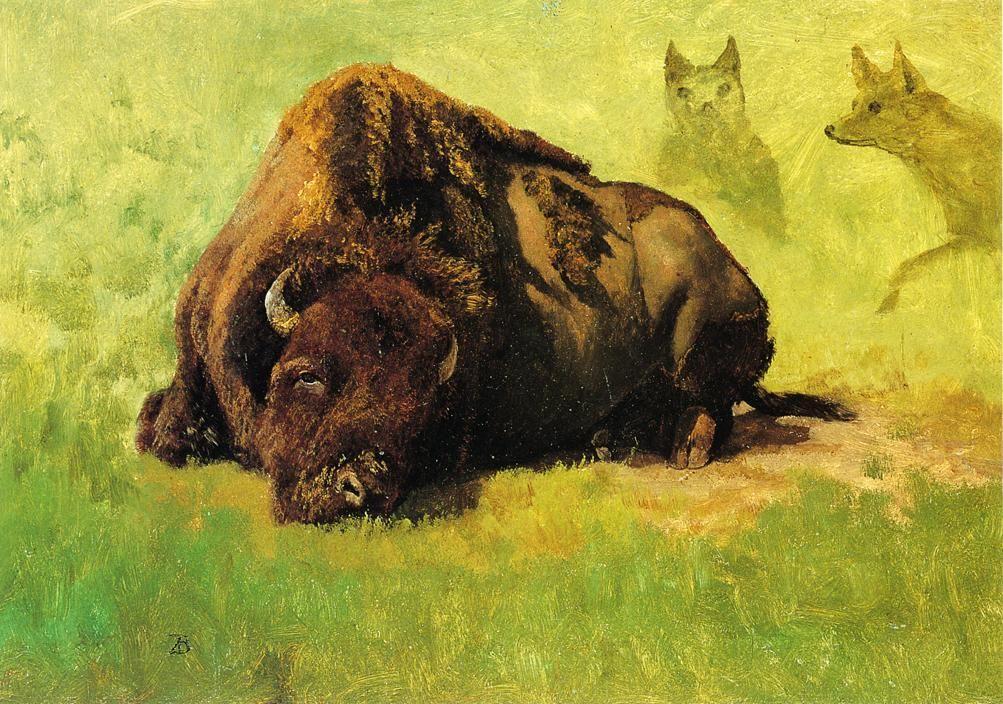 Bison with Coyotes in the Background - Albert Bierstadt