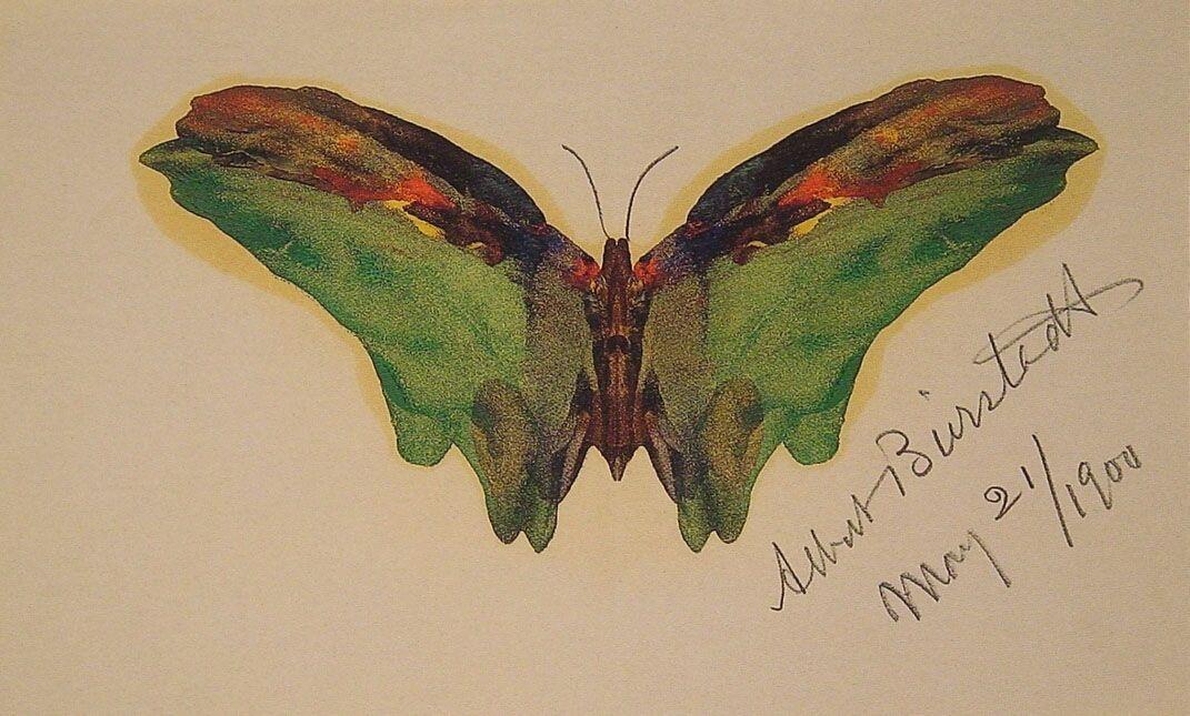 Butterfly - Albert Bierstadt