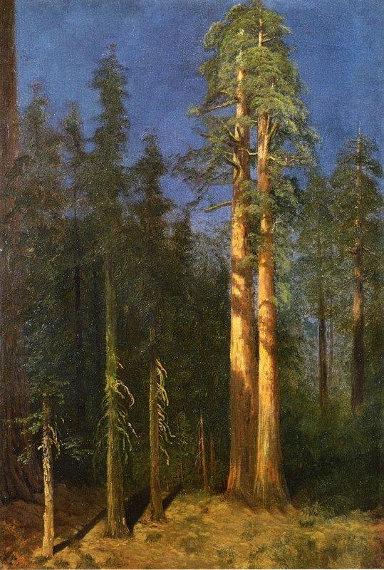 California Redwoods - Albert Bierstadt