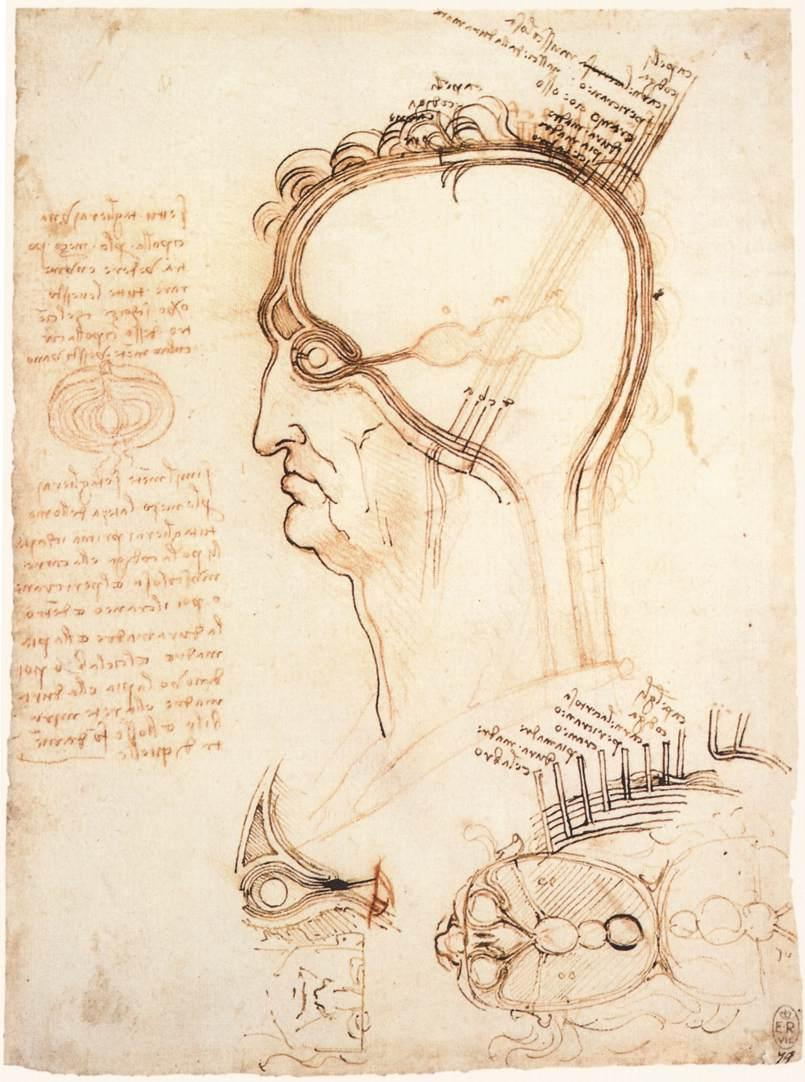 Comparison of scalp skin and onion - Leonardo da Vinci