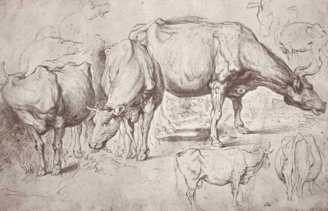 Cows - Peter Paul Rubens