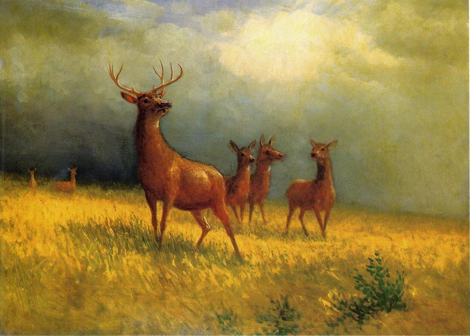 Deer in a Field - Albert Bierstadt