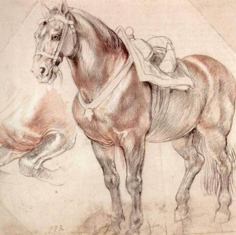 Etude of horse - Peter Paul Rubens