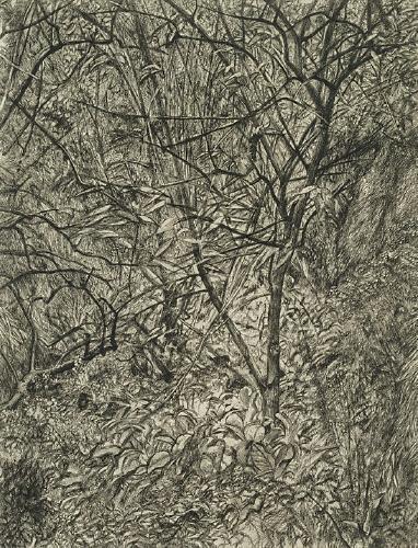 Garden in Winter - Lucian Freud