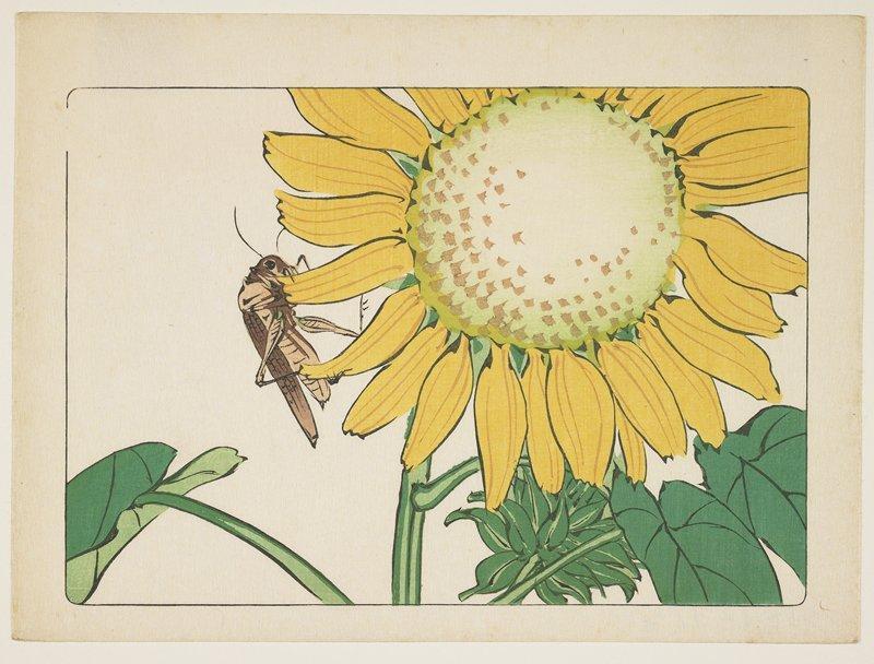 Grasshopper and sunflower - Shibata Zeshin