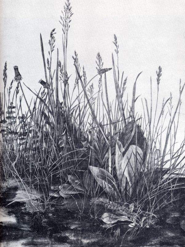 Great piece of turf study of weeds - Albrecht Durer