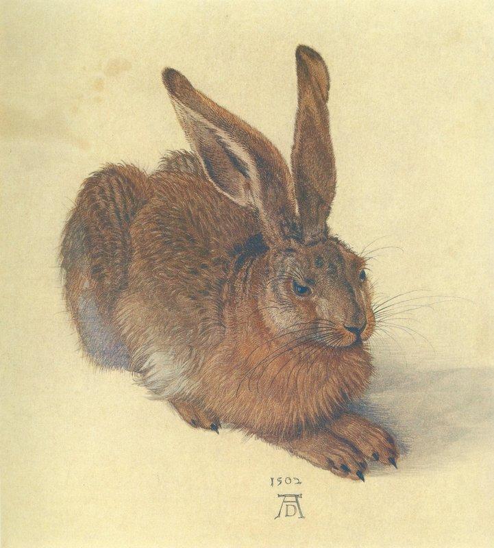 Hare - Albrecht Durer