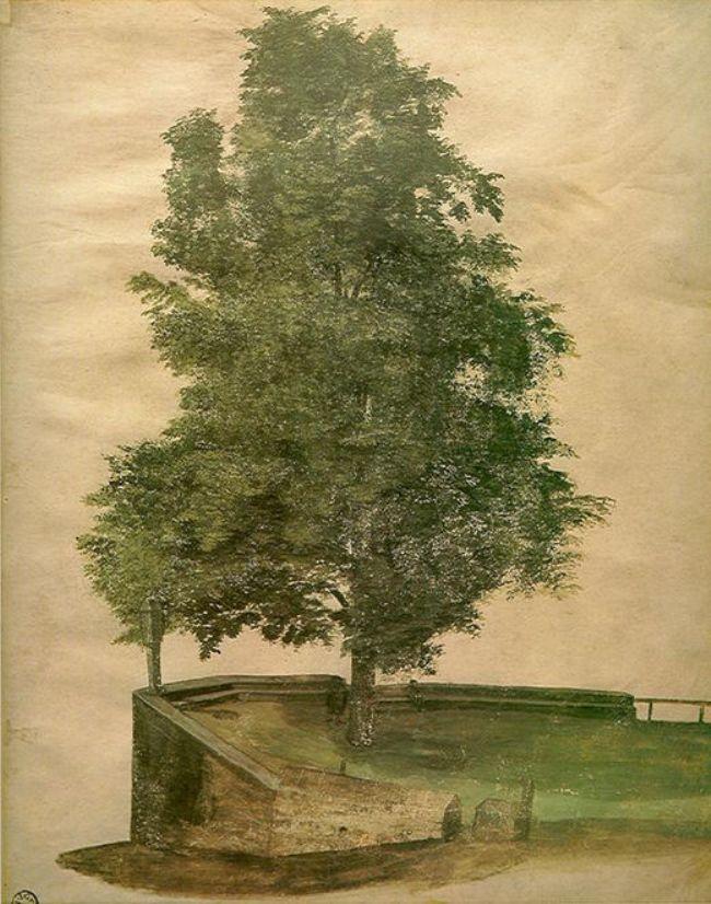 Linden Tree on a Bastion - Albrecht Durer
