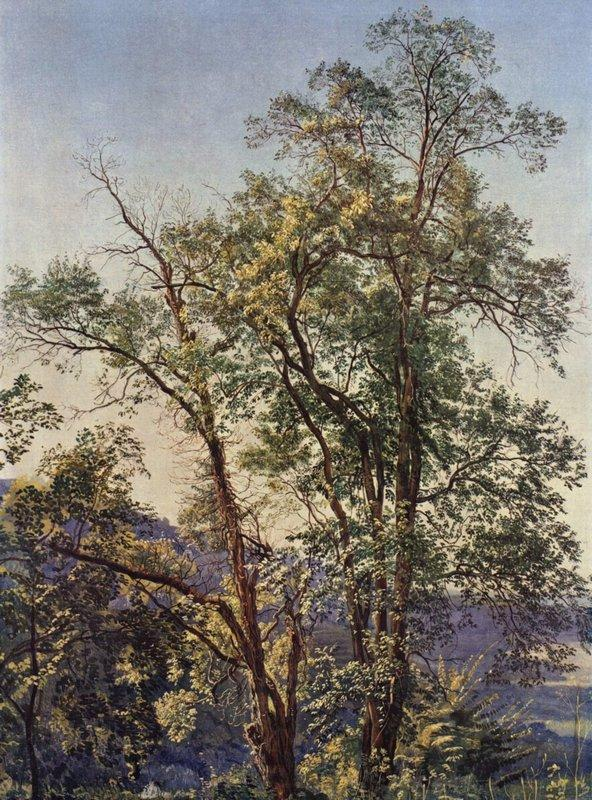 Olive trees - Alexander Ivanov