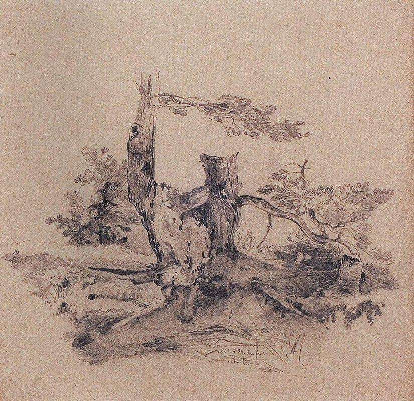 Pines, adjacent to the root of the barrel - Aleksey Savrasov