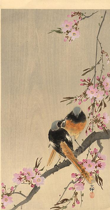 Redstart on cherry branch - Ohara Koson