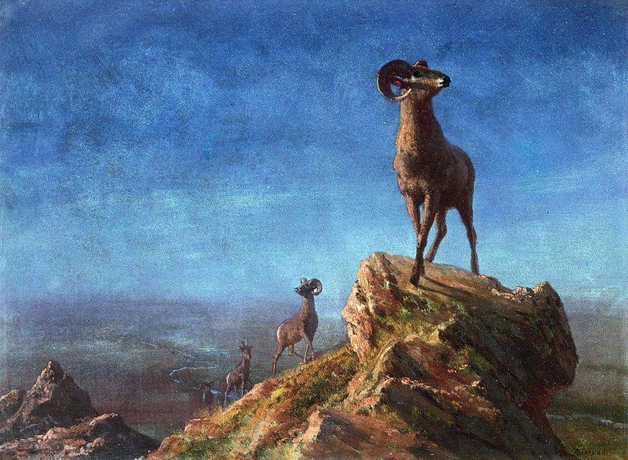 Rocky Mountain Big Horns - Albert Bierstadt
