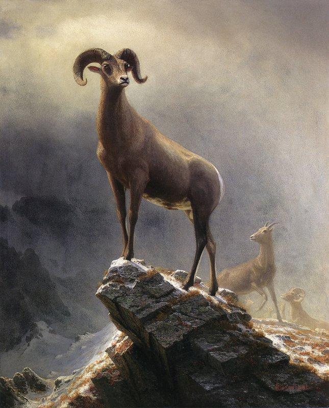Rocky Mountain Sheep - Albert Bierstadt