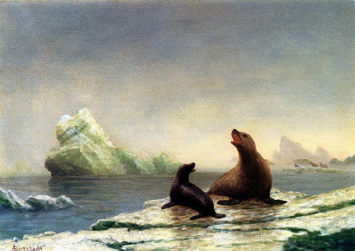 Seals - Albert Bierstadt