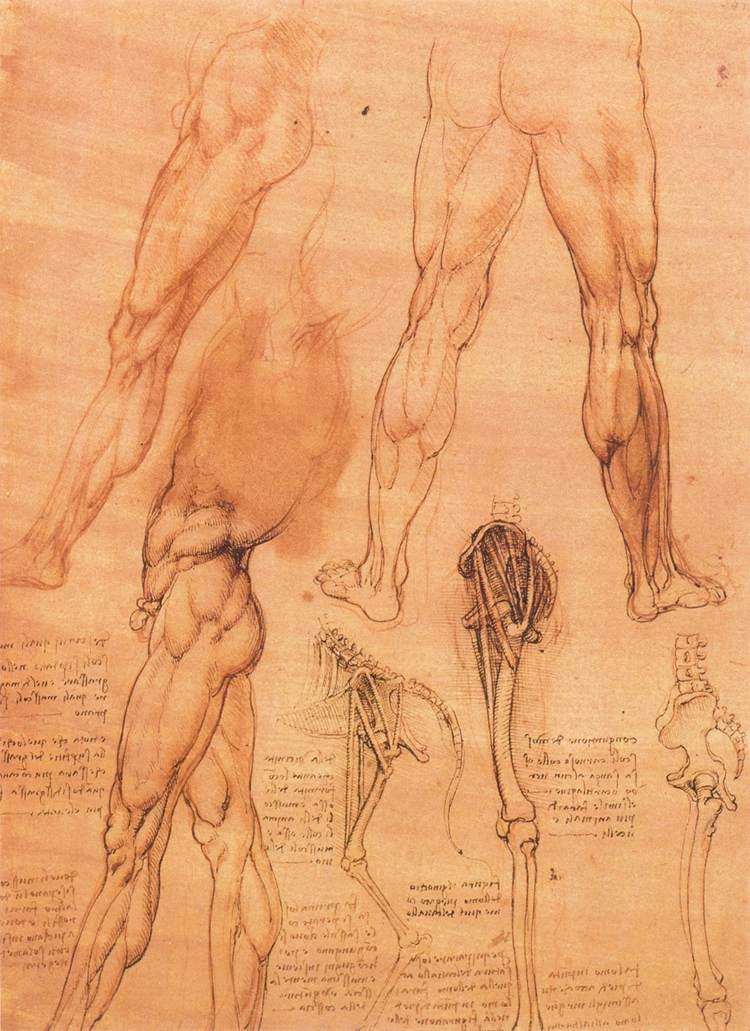 Studies of legs of man and the leg of a horse - Leonardo da Vinci