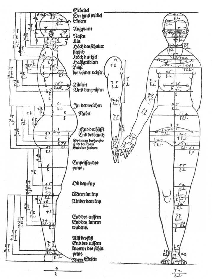 Studies on the Proportions of the Female Body - Albrecht Durer