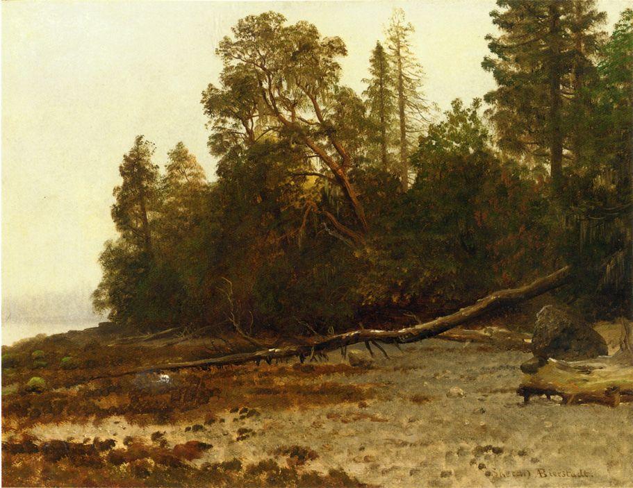 The Fallen Tree - Albert Bierstadt