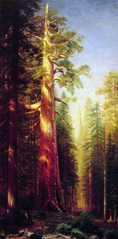 The Great Trees, Mariposa Grove, California - Albert Bierstadt