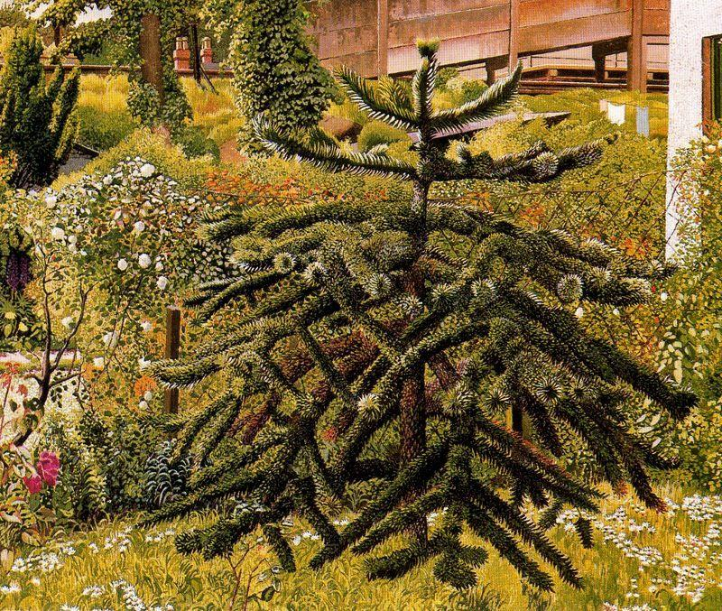 The Monkey Puzzle, Whitehouse, Northern Ireland - Stanley Spencer