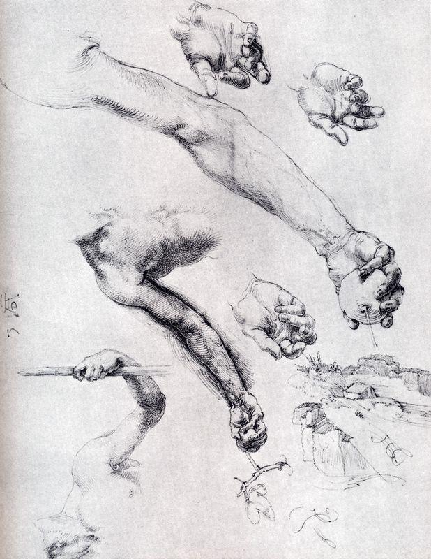 Three Studies From Nature For Adam`s Arms - Albrecht Durer