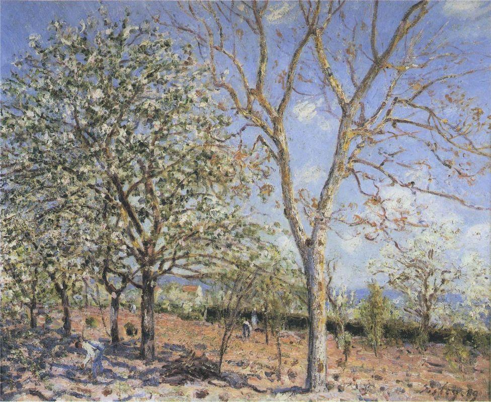Trees in Bloom - Alfred Sisley