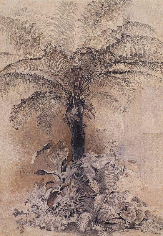 Tropical plants - Aleksey Savrasov