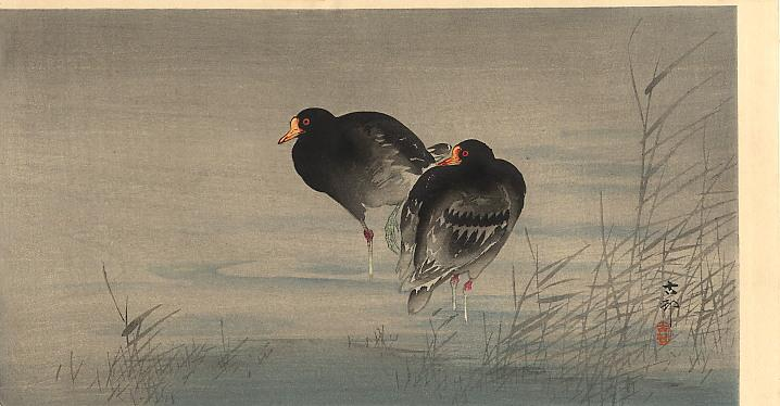 Two Gallinules in Shallow Water - Ohara Koson