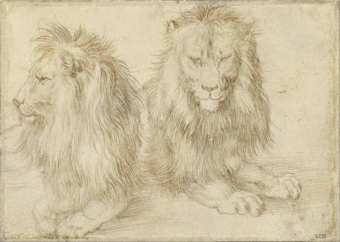 Two seated lions - Albrecht Durer