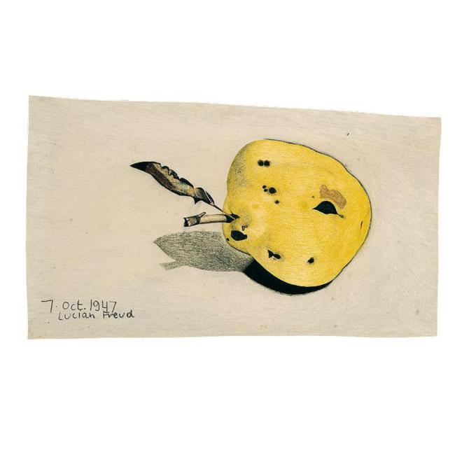 Untitled (Quince) - Lucian Freud