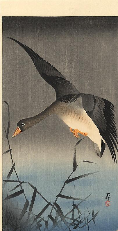 White-fronted goose descending over reeds - Ohara Koson