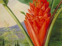 Banana, American Aloe and Cypress in a Garden, Java – Marianne North