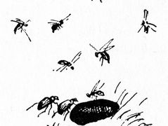 Insects – Theodor Severin Kittelsen