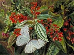 Trees Laden with Parasites and Epiphytes in a Brazilian Garden – Marianne North