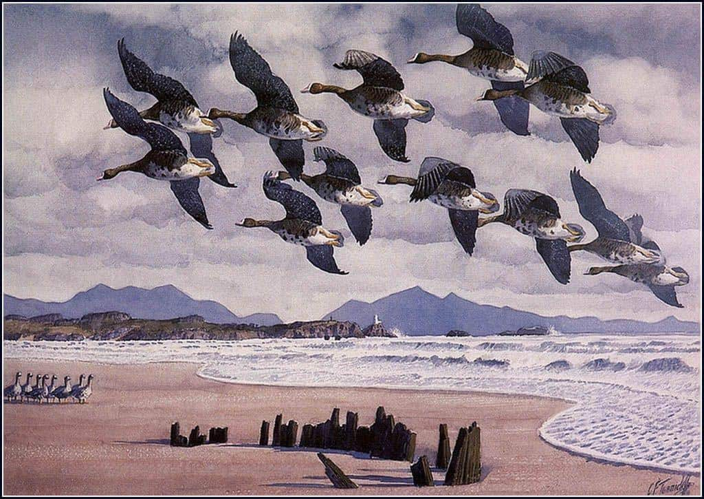 Coming In To Land - Charles Tunnicliffe