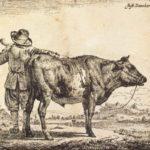 Bull – Adriaen van de Velde