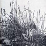 Great piece of turf study of weeds – Albrecht Durer