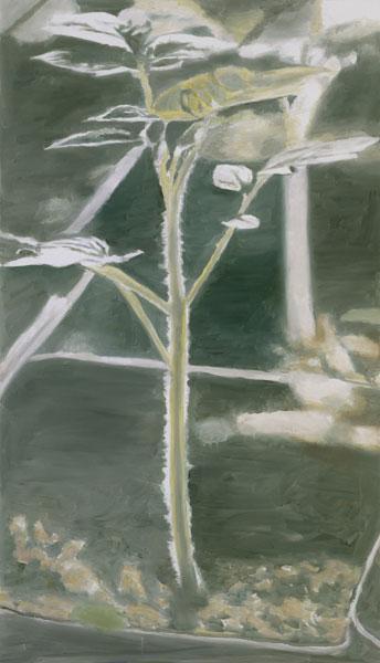 Plant - Luc Tuymans