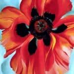 Red Poppy VI – Georgia O'Keeffe