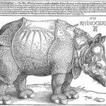 Rhinoceros – Albrecht Durer