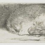 Sleeping puppy – Rembrandt