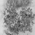 Sorrel – Albert Huie