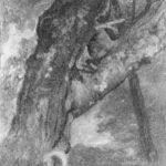 Study of a Tree – Albert Bierstadt
