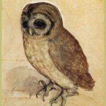 The Little Owl – Albrecht Durer
