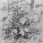 Young crop of nuts – Ivan Shishkin